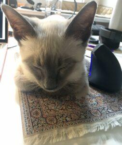 Katze bewacht Computer-Maus